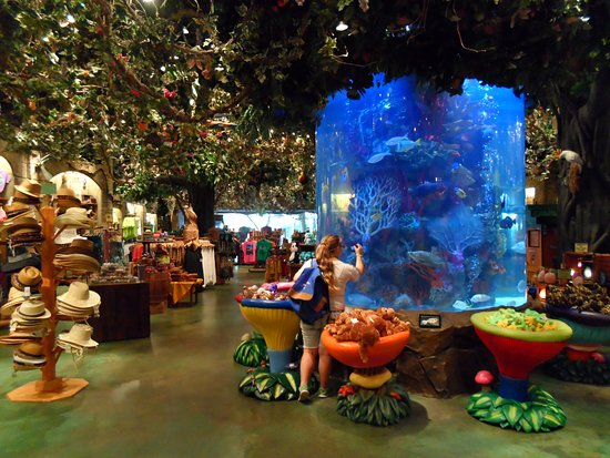 rainforest-cafe-disney